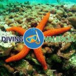 Дайвинг центр Diving Valencia (Валенсия)