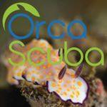 Дайвинг центр Orca Scuba (Сингапур)